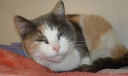 Breed: Dilute Calico   Age: Adult   Sex: F   Size: L Hello. I am new to adoptable so keep checking. So far I am very friendly, love to cuddle, am great with other cats and dogs as well.   View this pet on Petfinder.com Contact: Bonnyville District SPCA |