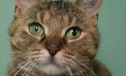 Breed: Domestic Short Hair Torbie   Age: Adult   Sex: F   Size: L Hi there, I'm Cranberry. I'm as sweet as my name suggests! My eyes aren't usually this funny looking, but I just HAD to ruin my photoshoot, me being my goofy self. I just love hanging out