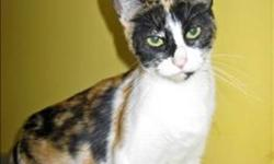 Breed: Domestic Short Hair   Age: Adult   Sex: F   Size: M Hi! My name is Olive! I am a Calico. I am 2 years young. I was found abandoned at the back of the shelter. Burrr! I am looking for my forever home. I hope that you will come and visit me. Please