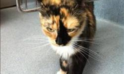 Breed: Domestic Short Hair   Age: Adult   Sex: F   Size: M Primary Color: Calico Weight: 3.7 Age: 2yrs 2mths 1wks Animal has been Spayed   View this pet on Petfinder.com Contact: BC SPCA Burnaby Branch | Burnaby, BC