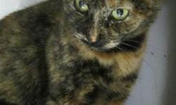 Breed: Domestic Short Hair   Age: Adult   Sex: F   Size: M Roma was found with her grown kittens living under a trailer. They appear to have been dumped in the area and made shelter where they could. She is a very sweet girl who is a bit unsure of her new