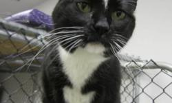 Breed: Tuxedo   Age: Adult   Sex: F   Size: M Jenny has returned to SCAT because her family had to move. Her charming personality remains intact, but she has put on a few extra ounces over the years. A chatty lady, she is also shy at first meeting but