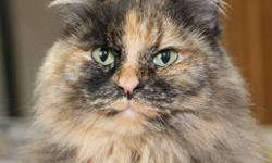Breed: Tortoiseshell   Age: Adult   Sex: F   Size: M Mimi was recently returned to the shelter when her owner was forced to give her up. She is very affectionate but does not appreciate tummy rubs or excessive handling. Mimi is an excellent mouser and has