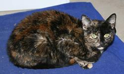 Breed: Tortoiseshell Domestic Short Hair   Age: Adult   Sex: F   Size: S DOB Spring 2007 Emma has very beautiful eyes that make her irresistable. She is very gentle, petite, little girl that needs a loving home to bring out the confidence in her that is