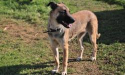 Breed: Shepherd   Age: Adult   Sex: F   Size: L Very nice female mix.. Nice personaltiy very playful and lots of energy looking for a good home...would make a great country dog, excellent dog for walking..just needs some love...Come on in and check her