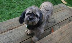 Breed: Shih Tzu Poodle   Age: Adult   Sex: F   Size: S My name is Kiki and I am part Shih Tzu and maybe part Poodle? or maybe I have a bit of Spaniel too? I am excellent with cats, most other dogs and good with children.....I am up to date with all my