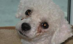 Breed: Poodle   Age: Adult   Sex: F   Size: S Suzy is a very sweet 4 year old poodle mix. We rescued her from a puppy mill. Despite her terrible beginnings Suzy is adjusting really well to her new life. Her foster dad reports that she is happy to go for