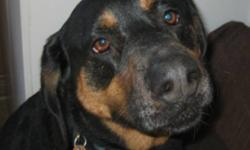 Breed: Doberman Pinscher Coonhound   Age: Adult   Sex: M   Size: L Moe is a 7 year old Doberman/Coonhound and is looking for a new home through no fault of his own. His owner lost his job and was forced to move into a place where he could not have a dog.