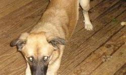 Breed: German Shepherd Dog   Age: Adult   Sex: M   Size: L Voici Nayeli qui signifie « I love you ». La raison??? Les annonces gratuites! Il a fait tellement de foyers avant d'arriver ici. Il est évident que personne ne s'est vraiment préoccupé de lui. Il