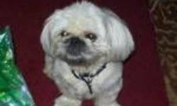Breed: Pekingese Shih Tzu   Age: Adult   Sex: M   Size: S Update June 16/11 This man is doing very well in foster care he isawesome with kids that are over 10yrs old as he does not like to be over man handled. He is great with all dogs he meets and cats!
