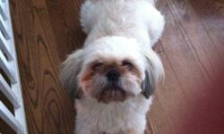 Breed: Shih Tzu   Age: Adult   Sex: M   Size: S Rocky was born April 2010. Rocky has lived with other dogs, and has not problems with cats. He is good with kids as well. Rocky love to cuddle with people and loves his walks. He will benefit from a house