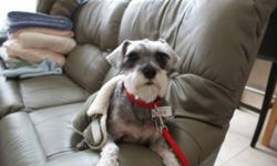 Breed: Schnauzer   Age: Adult   Sex: M   Size: S Siru is a lovely mini Schnauzer in need of a new home. He has only known one home but his family is moving out of the country and he needs to find a new home. Siru is 8 years old - the perfect age for a