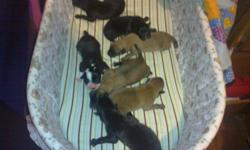 We have 6 puppies thay all need to go. No shots because of cheap price would have to charge alot more with shots.   We have mom and dad they are both well behaved. Really good with kids.