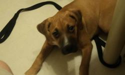 We have a lovely Boxer/American Bulldog he is 6 months old. Aeos has all of his shots, canine distemper, heartworm prevention, and dewormer. He is an amazing dog that loves to go to the dog parks and play with other dogs and then come home and be the
