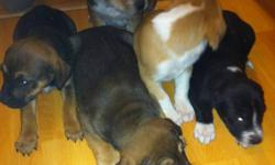 4 pups left please call or text 7802997619 $150.00 obo not sure what there crossed with (the last pic is the mother) This ad was posted with the Kijiji Classifieds app.