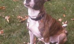 Hi we are getting rid of our beautiful american bull dog mix , his names seth ,would like to see him go to a nice family with a yard . he is great with others and kids , He plays very well with other animals , and is well trained . He can stroll with out
