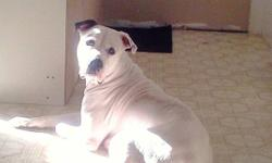 Our pure bred american bulldogs had a beautiful litter of puppies Nov 5th 2011. father is 95 lbs johnson breed and mother is 110lbs scott breed. both beautiful, healthy and stalky. along with pups all developing great!. will come vet checked, dewormed and