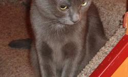 Kaditta is a beautiful gray kitty cat.  She is very gentle, sweet and loving.  Her adoption fee includes:  Spay, Vaccines, De-Worming and Flea Control.  All monies collected goes directly back into other cats and kittens that are in need.  Kaditta is