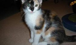 Breed: Calico Domestic Short Hair   Age: Baby   Sex: F   Size: M Dixie, Dora, Darla, Ditto and Dotz were recently brought into care with their mom, Delilah. They were born approximately October 1. They are all very stunning and have great personalities.