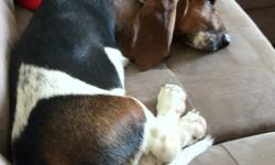 I Have a male Bassett hound for sale . Found out that my husband is allergic .. He is so sweet love kids and is so playful .. I had to have to sell him .. Email me back right away This ad was posted with the Kijiji Classifieds app.