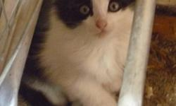I have 5 kittens to give away for free!   4 black and white & 1 gray. they are very adorable and are eating hard food already!! they love to play and cuddle. would make great pets!   call (204)878-4226 ask for elisabeth