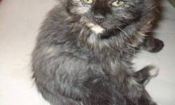 Tootsie is looking for her forever home!   Second Chance Animal Rescue/Adoptions is looking for a loving home for a very loving little girl. Her name is Tootsie, she came to us about 3 weeks ago, so we have had lots of time to show her how she should have