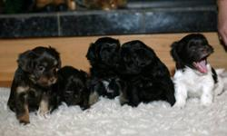 Three puppies left; two black and one brown. Adorable and very playful. Make wonderful pets! Please contact for more information. This ad was posted with the Kijiji Classifieds app.