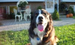 Hi, I am 8 years old and have a very good temperament,love everybody. My owners think I would make a great friend for an older person who can spend the time with me that I deserve. I have a knee that gets sore when I run to much so daily walks is all I