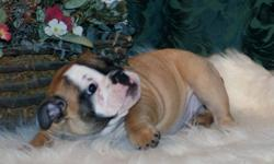 Two gorgeous little girls looking for their new families. THESE GIRLS are very well behaved, and a lot of fun. We have our shots, micro chip, a complete physical from our vet, written health guarantee, C.K.C. Registration. These little girls have