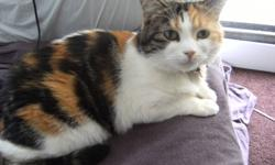 Name: Callie Breed: Calico Gender: Female Birth date: April 21st, 2008 Born: Tillsonburg, Ontario description: I am a friendly and playful cat who takes her time adjusting to new situations. I enjoy treats that taste of ocean blend mix and prefer to eat
