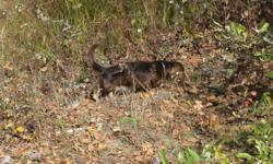 My name is Doc and I'm a one year old Dachshund. I'm a playful little guy and I get along really well with other dogs and cats, but I don't really like little children because they move too fast and scare me and I would feel really bad if I bit them. I