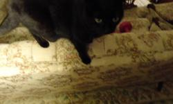 black cat- very loving and cuddly. isn't getting along with other cats in the house- would be best if was only cat or one other cat in the house. litter trained