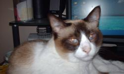 7 yr old part siamese trained indoor, fixed cat to give away to a good home.