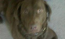 I have a 3 year old  CHESAPEAK BAY RETRIEVER I have to part with due to our change in  schedule. He would do really well on a farm or some where with lots of room to run. He would do well in a home that has no small children as he was raised with teenage