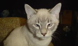 Two male kittens  free to good home.  Litter trained, healthy, friendly, good with other cats.