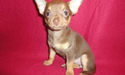 Santa came a little early...but i have a beautiful fun Loving Happy Healthy Short Coat Female Chihuahua Puppy.She is sooo Sweet N Super Playful...loves Toes...and is just full of beans.Chocolate/Tan in color.She will be approx 5 1/2 lbs full grown.Vet
