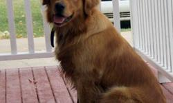 Hello! I have a litter of 10 purebred golden retriever puppies for sale   The parents have a geat qualities and have beautiful darker colors. The dad is a darker colored retriever with a loving and loyal personality. The mom is a smaller golden retriever