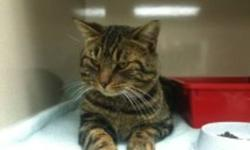 Clark came into Urban Cat Relief by walking into a trap.  He is the most precious, warm hearted cat you could find.  He is a darling, nicely manner..loves people and other pets He is dire need of a foster or permanent home.  Please please open your heart