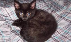 These beautiful kittens are ready to be adopted! They are very loving, always purring and very energetic and playful!   Meet The Kittens! http://www.ucrcats.com   Coleen - Found as an orphan, Coleen was hand-raised by a dedicated UCR volunteer. She is now