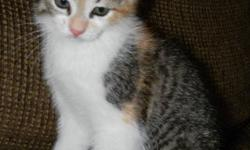 Just discovered that I am allergic & can't breathe in my home, I have this very sweet female kitten available to a good home ASAP.   She's approx 4.5 months old now. Not spayed yet as she hasn't had her 1st heat. She's very sweet & playful. She loves to