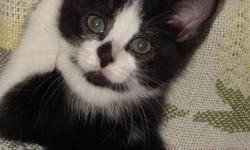 - - - CUTE - - - CUDDLY - - - PLAYFUL- - - Cutest ever Kitties... looking for their forever homes!  They are all female.    Very playful,        Love attention,             All healthy!                 And litter trained!       Come take a look! Any more