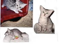 """""""The Egyptian Mau Cat"""" The only naturally spotted domestic cat in the world. Registered with """"The Cat Fanciers Association"""".  We have 2 kittens available: One silver spotted girl from our Sept 14 litter $1100, she might be ready by Christmas or in January"""