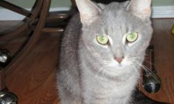 We have a beautiful grey tabby cat, that is free to a good home.  She is 3 yrs old, spayed, friendly, good with children, and healthy.  Can no longer keep her due to sons allergies.  We don't want anything for her, just a good home that will love her, and