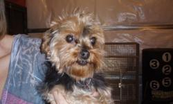 I have a female yorkie 5.5 yrs old House broken excellent with kids and other animals.If interested please contact me at 519-682-1051 or 519-809-1110
