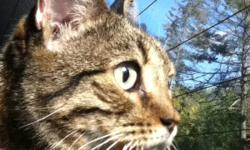 Is this your cat?? This cat was found by the kinsman splash pad in Simcoe. She is a young, healthy, friendly, tabby cat. Her front paws are declawed and we believe she maybe fixed. She is not micro chipped and does not respond well to dogs. My mom is