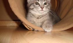 1 female kitten (grey tabby) and 1 male kitten (black tabby) in need of a home.  We'd love to keep them but already have two cats and don't have the room for two more.