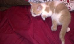 Litter Trained and eating Hard food  kittens are ready to go to their new homes theer are three males and two females left Please call 519 694 7061 if ur intrested in seeing the kittens