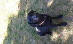 We are looking for a new home for our black lab. She is house trained however is currently a farm dog. Great with kids and our small shih tzu. We are Getting her fixed next week and her shots are all up to date. She needs lots of room to run and a family