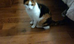 Free to good home, Mindy our family cat. Due to our sons allergies we can no longer keep her. She has all her shots, is spayed, declawed and micro chipped. She is friendly to children and dogs, we have a shepherd who she gets along with fine. She is