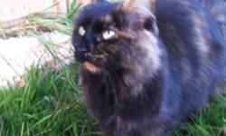 female, black & bit of orange. Stray from work. This ad was posted with the Kijiji Classifieds app.